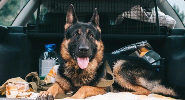 Про собаку-автолюбителя и зоозащитников