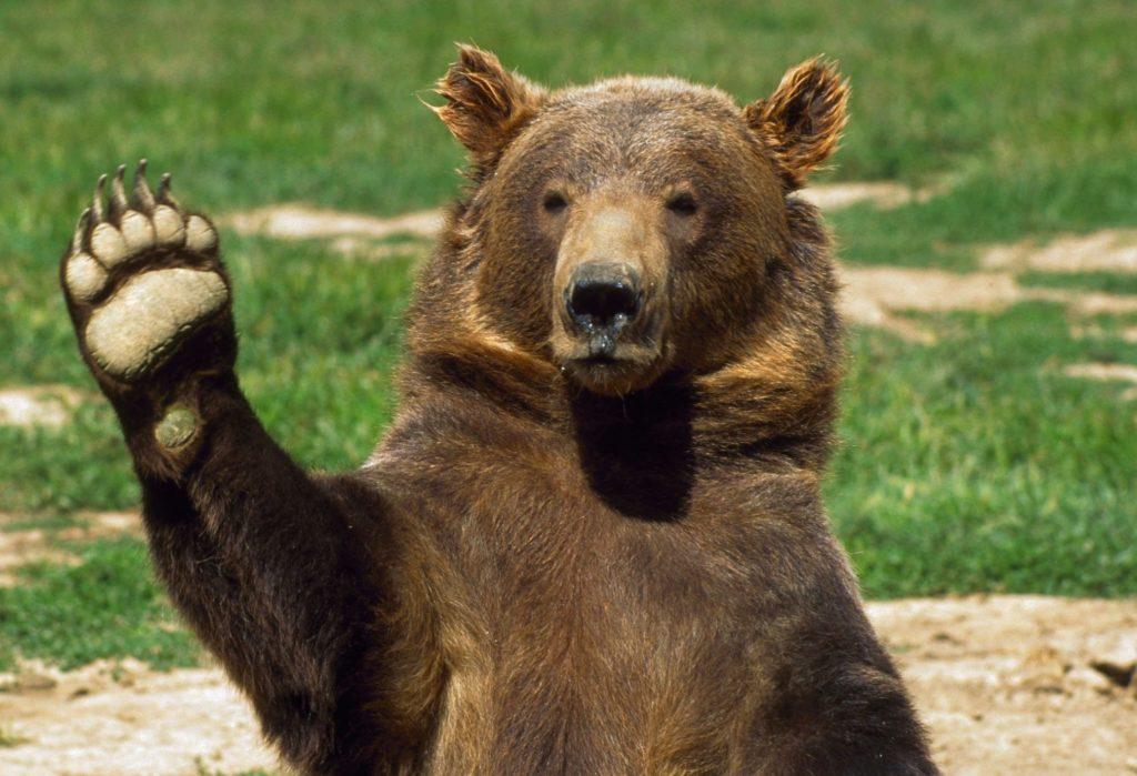Мужики, кто поехал за Петровичем, подтверждают, что видели на обочине медведя, будто он сидел и ждал спасателей