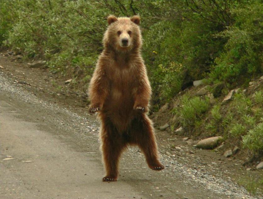 Существуют поверья на севере, что люди произошли от медведей