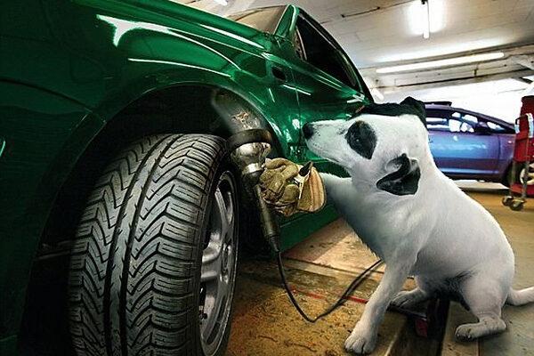 Собака - лучший друг автомеханика
