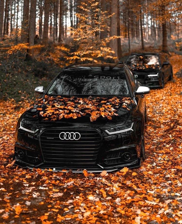 Audi A6 в осеннем лесу - просто сказочный вид